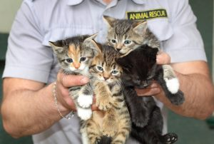 lean six sigma animal shelters